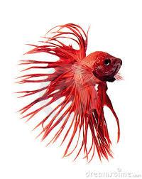 JapFish