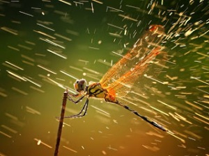 dragonfly-rain-storm_45835_600x450