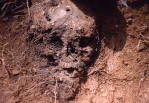 grave skull